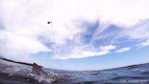 kiawah and folly beach fishing report