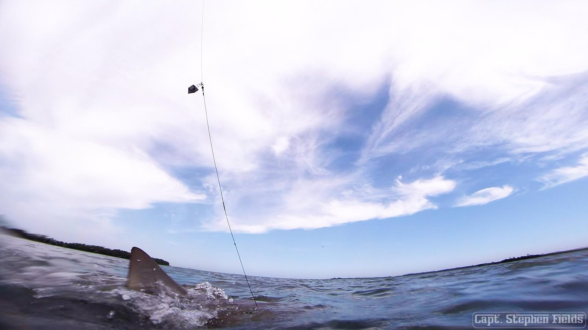 Kiawah and folly beach fishing report charter fishing for Kiawah island fishing